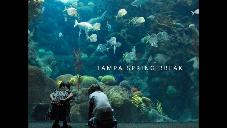 Tampa Spring Break