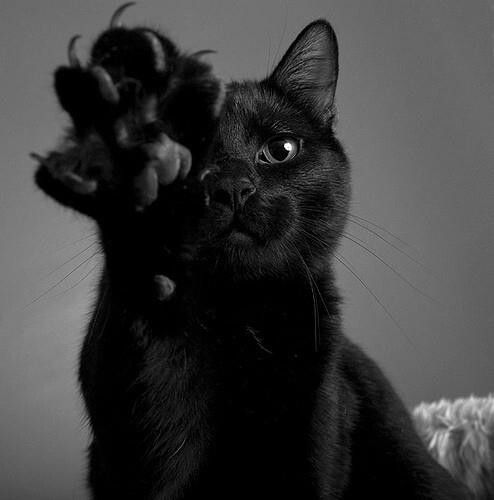 Black cat high five. Still say black cats are the best!