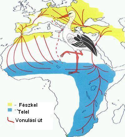 Fókusz - Költöző madarak