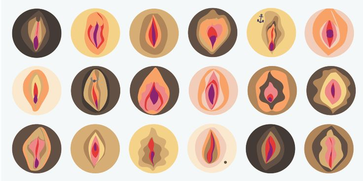 Vulvas: shapes, sizes and misconceptions – Clued In – Medium