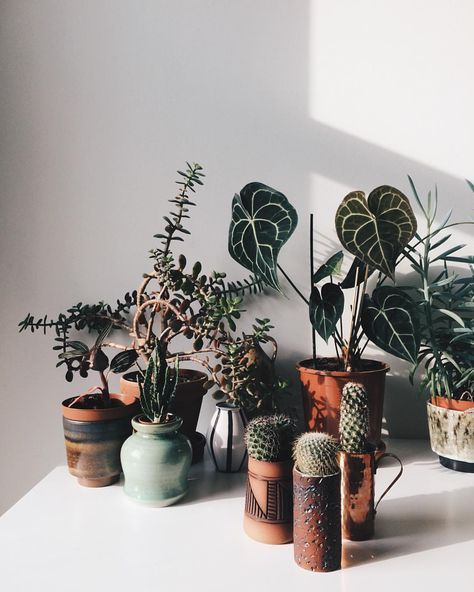 home and plant inspiration                                                                                                                                                                                 More