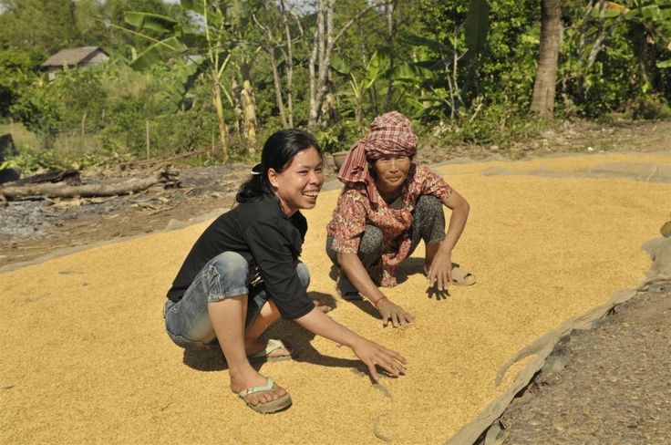 Drying rice and having a laugh - Stung Treng, Cambodia