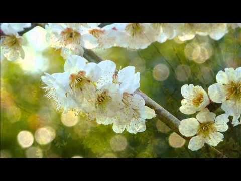 ☆ふるさと☆(童謡唱歌)-  癒しのオルゴール