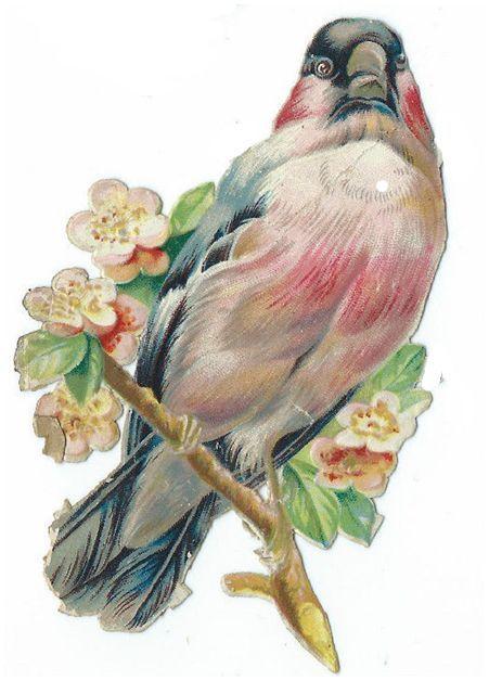 VICTORIAN DIE CUT SCRAP BIRD
