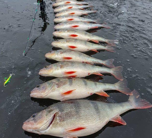 Pin Ot Polzovatelya Ohota I Rybalka Fishing And Hu Na Doske Rybalka Fishing And Hunting In Russia Rybalka Shenki Nahlyst
