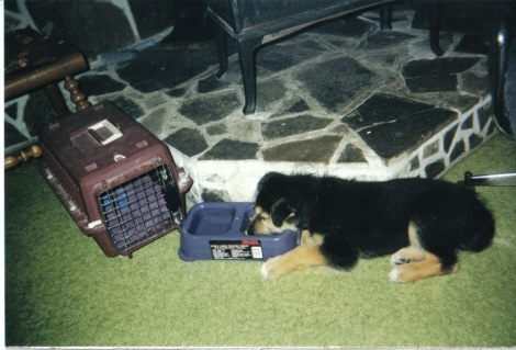 my pup looked like a bear he is now 14 years old!!!