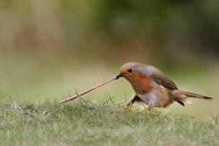 手机壳定制free flyknit   women Andrew Bailey Robin tugging Earthworm