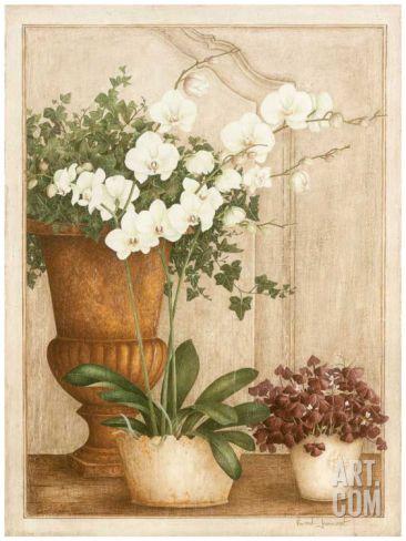 Grande Orchidée II Art Print by Vincent Jeannerot at Art.com