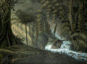 Brazilian Forest  Charles Comte de Clarac