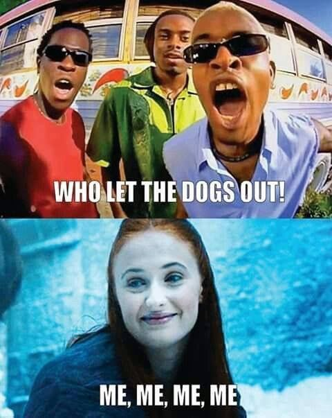 Who let the dogs out ?!!