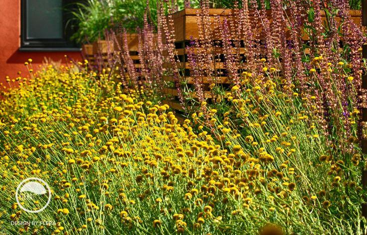 #landscape #architecture #garden #rooftop #meadow