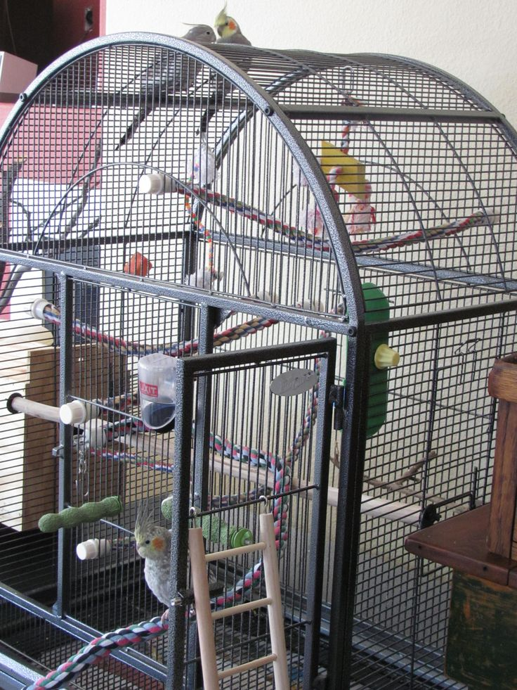 How To Set Up A Bird Cage For A Cockatiel, Parakeet or Parrot                                                                                                                                                                                 More