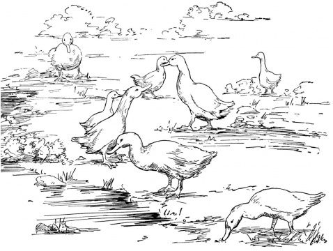Birds Coloring Pages Select From 27362 Printable Of Cartoons Animals Nature Bible And Many More