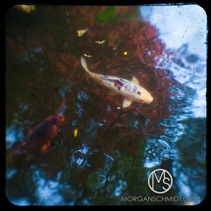 394 best images about koi on pinterest japanese koi for Koi japanese garden screensaver