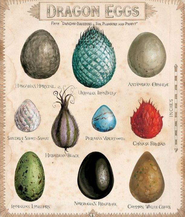 Dragon eggs of the HP Wizarding World
