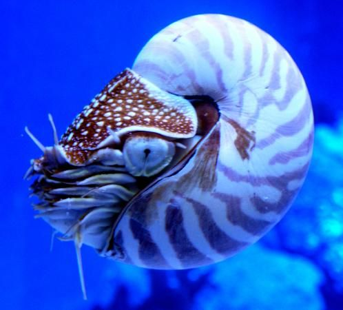 marine life images - Google Search