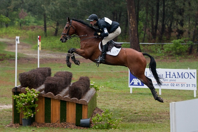 All Hail, Sir Toddy! Eventer Mark Todd Granted Knighthood   An Eventful Life