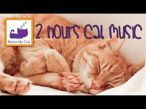 2 HOURS OF CAT MUSIC - RELAXING MUSIC FOR CATS - RELAXING SOUNDS