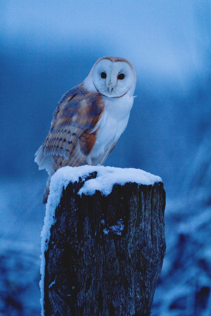Owl greeting card set welsh artist jen delyth celtic art studio - Land Of The Animals Lsleofskye Untitled