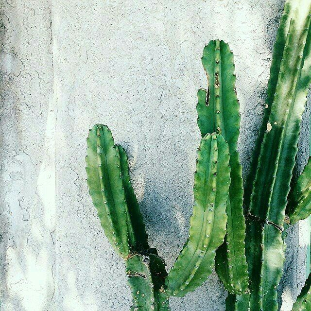 #flowers #green #plants #cactus #beautiful #botanical #nature #freedom #photography #aesthetic #grunge #minimal #art #green #colors #photo #travel #view #love #amazing #instagood #lookup #sunlight #summer #picture #sunset #lights #sky #wall #blackandwhite http://tipsrazzi.com/ipost/1507622297450896907/?code=BTsJn3nBN4L