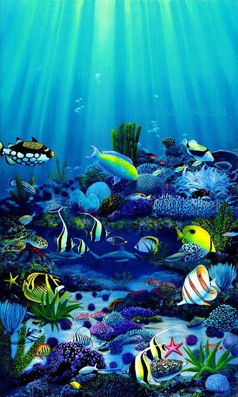 1417 best mar playa y peces ilustraciones y fotos for Tropical fish painting