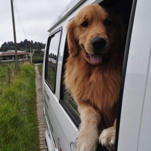 Otelo llegando al Colegio de Perros Felices