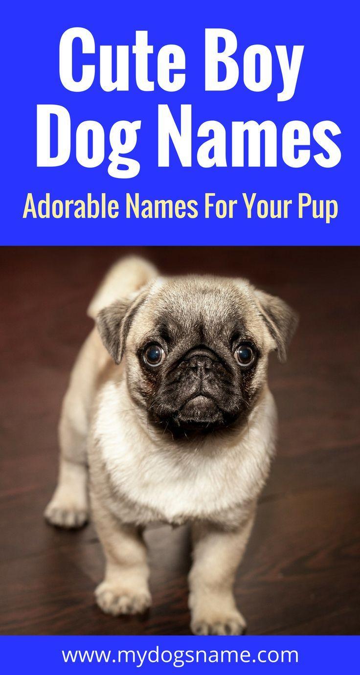 Names My Dog S Name Puppy Training Biting Training Your Puppy Puppy Training