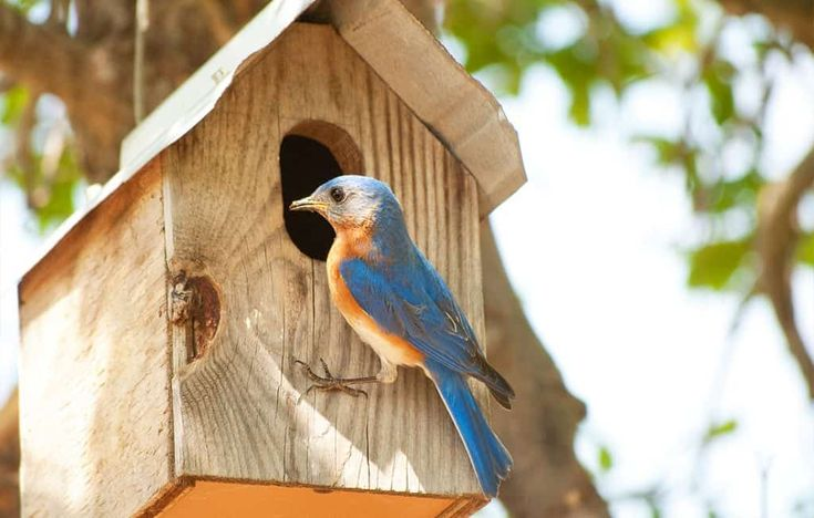 11 Tips on How to Attract Bluebirds to Your Yard (2020 ...