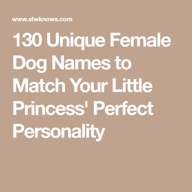 130 Unique Female Dog Names To Match Your Little Princess Perfect Personality