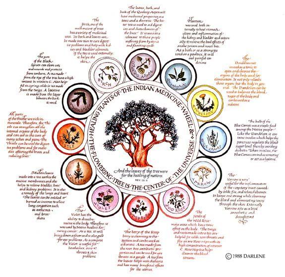 Indian Medicine Wheel