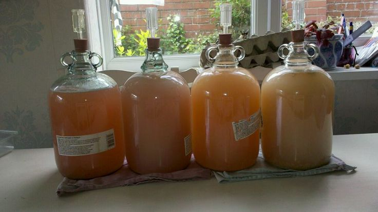 Making wine. This pic is 4 stages of rhubarb, each about a week apart.
