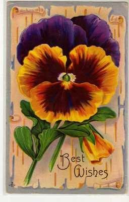 2 Beautiful Pansy Pansies Vintage Greeting Postcards 010113 | eBay