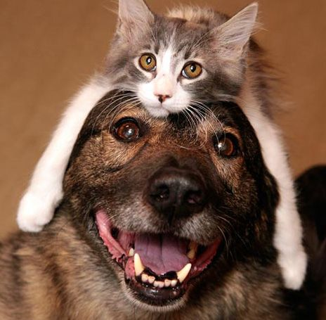 Pictures of dogs wearing cat hats