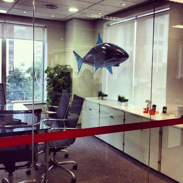 Sala de reuniões ou um aquário? Nosso tubarão de SP