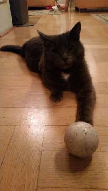 Gušík with a ball.