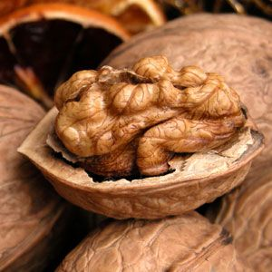 English Walnut Tree - Walnut Trees - Willis Orchard Company