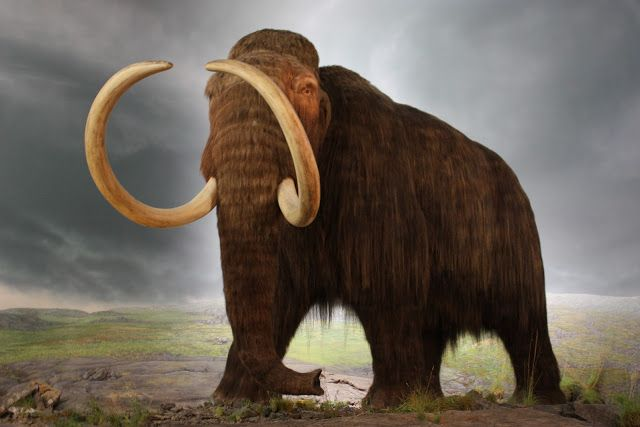 Genome Sequencing Brings Us One Step Closer To Return of the Woolly Mammoth