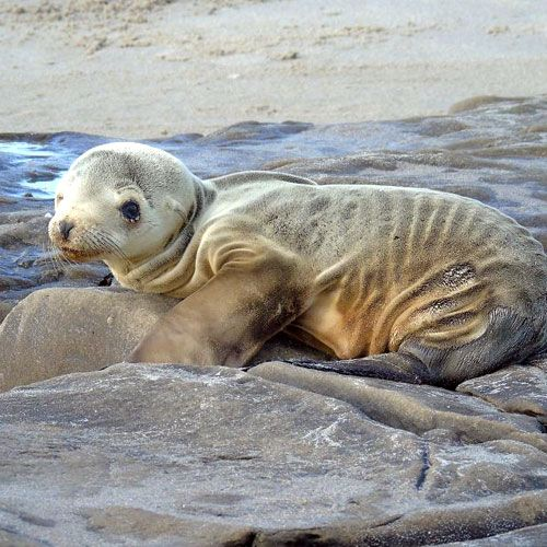 Add Your Name Now: Sea Lion Pups Are Starving Baby sea lion pups are dying because overfishing has left our oceans without enough fish.