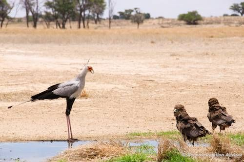 Birds also gather at waterholes.