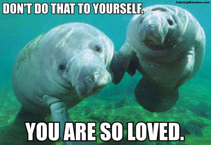 """Pin for Later: 20 Calming Manatee Memes That Perfectly Describe Your Life When You Get Into """"Forever Alone"""" Mode You'll feel better tomorrow."""