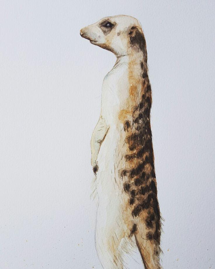 Meerkat 1 Artist Lorna Pauls  Watercolors on Half imperial Bockingford watercolour paper  Done February 2017