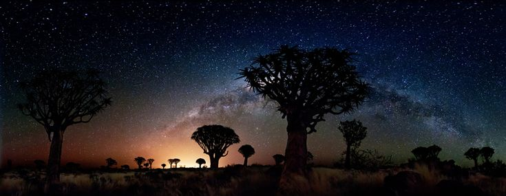 Quiver trees by night 2, 2012 (Florian Breuer)