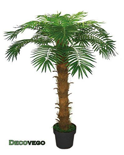 7 best ppplantes images on pinterest artificial tree for Plante palmier