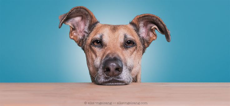 Every meal you make. by Elke Vogelsang on 500px
