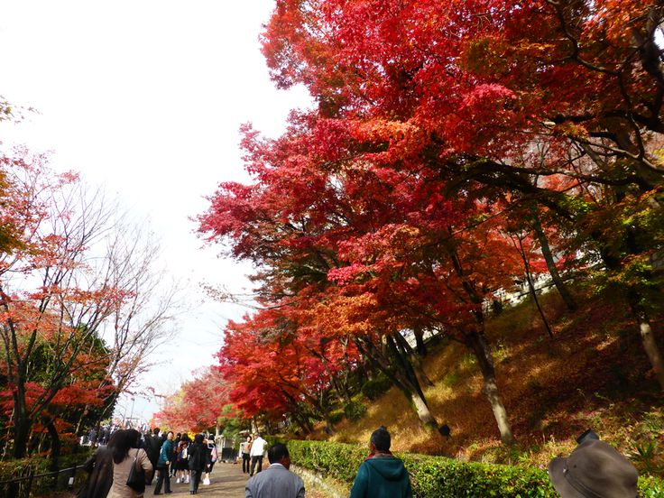 Kyoto colour, Nov 2014