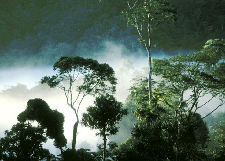 Teori materi biologi tentang keanekaragaman hayati  http://www.prosesbelajar.com/2015/12/teori-materi-biologi-tentang-keanekaragaman-hayati.html