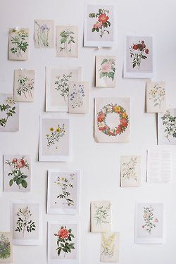 HOME STYLE | Botanical Prints Display | P.J. Redouté |