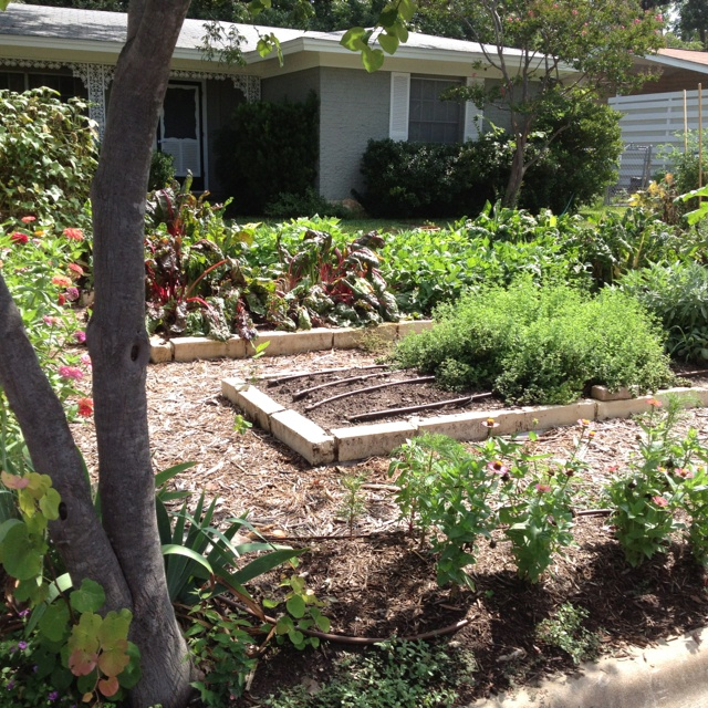 17 Best Images About Front Yard Vegetable Gardens On Pinterest Raised Beds