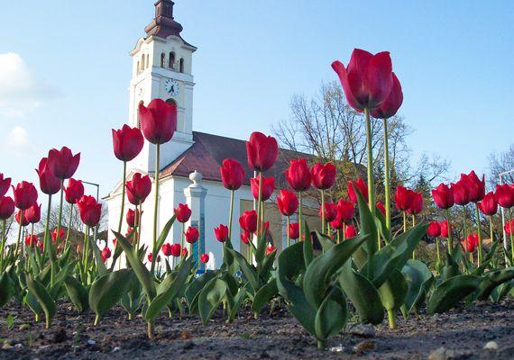 7 virágos hely az országban: tavaszi kiránduláshoz tökéletes | femina.hu