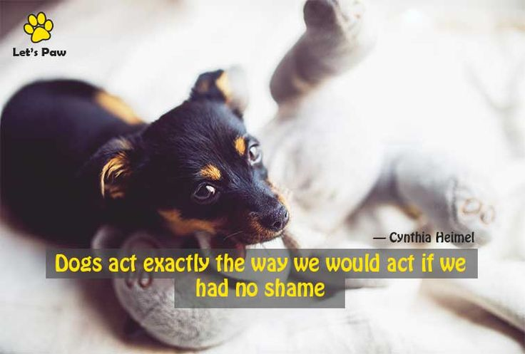 Dogs act exactly the way we would act if we had no shame. —Cynthia Heimel